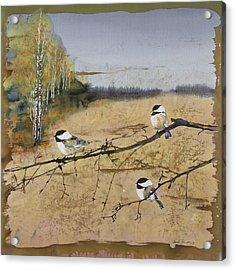 Chickadees And A Row Of Birch Trees Acrylic Print by Carolyn Doe