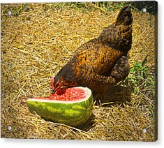 Chicken And Her Watermelon Acrylic Print by Sandi OReilly