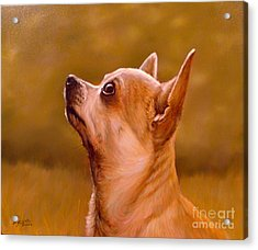 Chihuahua Portrait Acrylic Print by John Silver