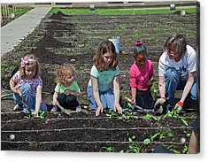 Children At Work In A Community Garden Acrylic Print by Jim West