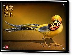 Chinese Golden Pheasant Acrylic Print by John Wills