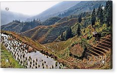 Chinese Rice Terraces Acrylic Print by Alexandra Jordankova