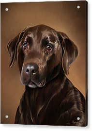 Chocolate Lab Acrylic Print by Michael Spano