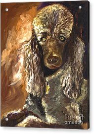 Chocolate Poodle Acrylic Print by Susan A Becker