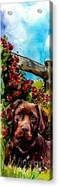 Chocolate Raspberry Fields Acrylic Print by Molly Poole
