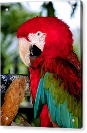 Chowtime Acrylic Print by Karen Wiles