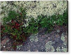 Christmas Moss Acrylic Print by Harold E McCray