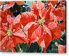 Christmas Poinsettia Magic Acrylic Print by David Lloyd Glover