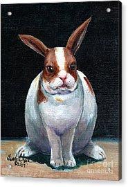 Chubby Bunnie Acrylic Print by Linda L Martin