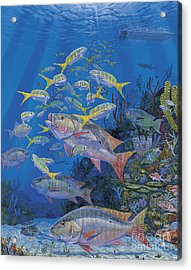 Chum Line Re0013 Acrylic Print by Carey Chen