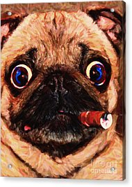 Cigar Puffing Pug - Painterly Acrylic Print by Wingsdomain Art and Photography