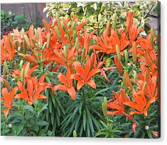 Cincture Of Lilies Acrylic Print by Sonali Gangane