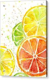 Citrus Fruit Watercolor Acrylic Print by Olga Shvartsur