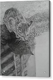 City Kitty Acrylic Print by Frances Vincent