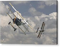 Close Encounter Acrylic Print by Pat Speirs