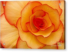 Close To Saturn Acrylic Print by Anne Gilbert
