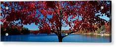 Close-up Of A Tree, Walden Pond Acrylic Print by Panoramic Images