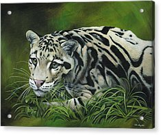 Clouded Leopard Acrylic Print by Heather Bradley