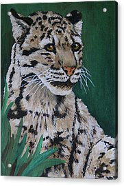 Clouded Leopard Acrylic Print by Margaret Saheed