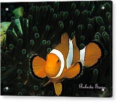 Clown Fish Acrylic Print by Roberta Sassu
