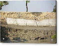 Coastal Flood Defences In The Sunderbans Acrylic Print by Ashley Cooper