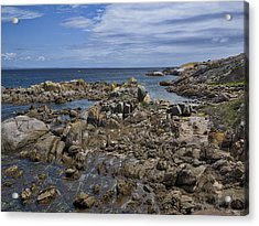Coastline - Montague Island - Australia Acrylic Print by Steven Ralser