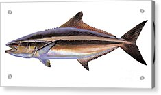 Cobia Acrylic Print by Carey Chen