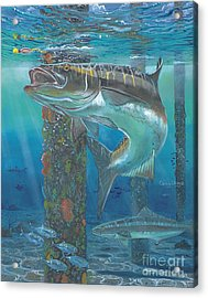Cobia Strike In0024 Acrylic Print by Carey Chen