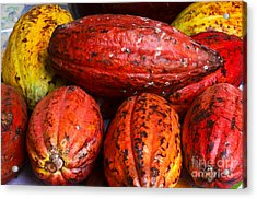 Cocoa Pods Acrylic Print by Pravine Chester