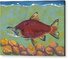 Coho Salmon Acrylic Print by Peggy Wilson