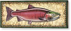 Coho Salmon Spawning Panel Acrylic Print by JQ Licensing