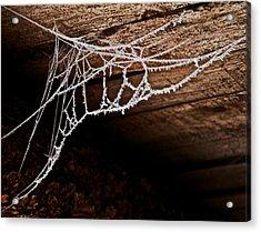 Cold Web Acrylic Print by Odd Jeppesen