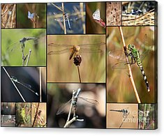Collage Marsh Life Acrylic Print by Carol Groenen