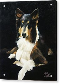 Collie Acrylic Print by Alice Leggett