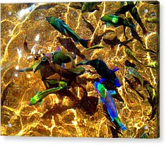 Color Fish Acrylic Print by Saki Art