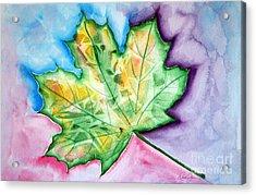 Color Leaf Acrylic Print by Dani Abbott