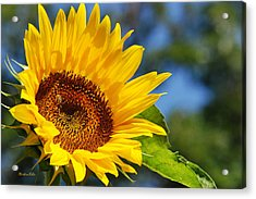 Color Me Happy Sunflower Acrylic Print by Christina Rollo