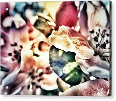 Color Me Pretty... Acrylic Print by Marianna Mills