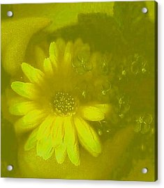 Color Suprise Acrylic Print by Pepita Selles