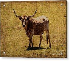 Colorado Longhorn Acrylic Print by Janice Rae Pariza