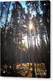 Colorado Pines Acrylic Print by Garren Zanker