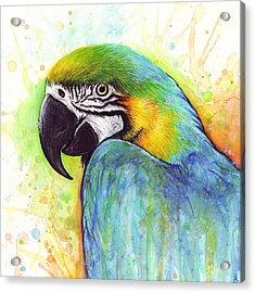 Macaw Watercolor Acrylic Print by Olga Shvartsur