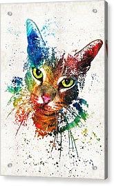 Colorful Cat Art By Sharon Cummings Acrylic Print by Sharon Cummings