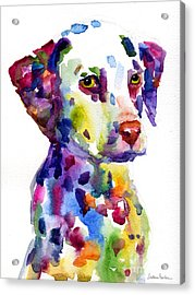 Colorful Dalmatian Puppy Dog Portrait Art Acrylic Print by Svetlana Novikova