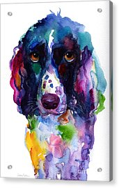 Colorful English Springer Setter Spaniel Dog Portrait Art Acrylic Print by Svetlana Novikova