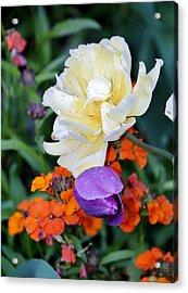 Colorful Flowers Acrylic Print by Cynthia Guinn