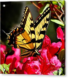 Colorful Flying Garden Acrylic Print by Nava Thompson