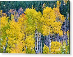 Colorful Forest Acrylic Print by James BO  Insogna