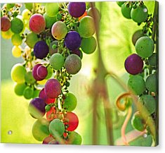 Colorful Grapes Acrylic Print by Peggy Collins