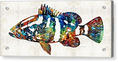 Colorful Grouper 2 Art Fish By Sharon Cummings Acrylic Print by Sharon Cummings